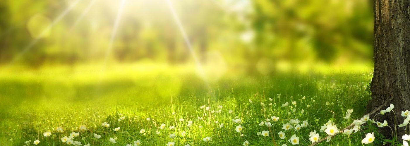 Réveillez votre bien-être avec la naturopathie et la sophrologie